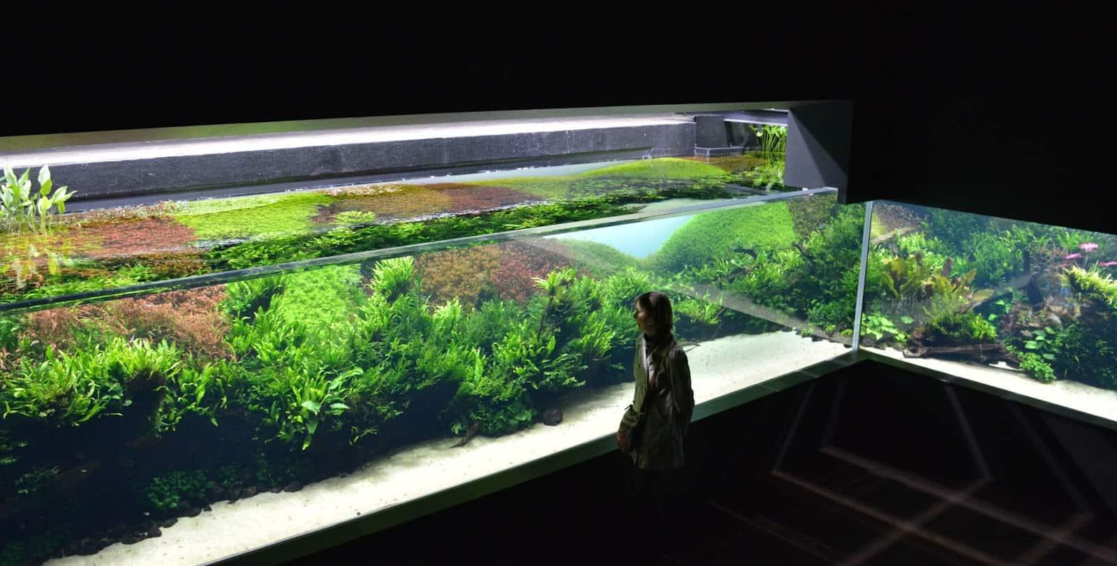Exposition temporaire oceanarium lisbonne